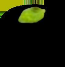 h3 leaf 2