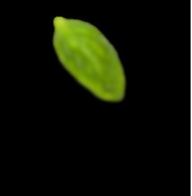 h4 leaf 1